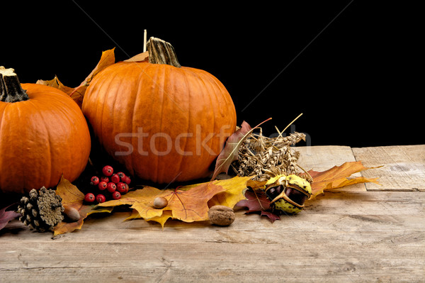 Pumpkins with autumn leaves for thanksgiving day on black background Stock photo © dla4