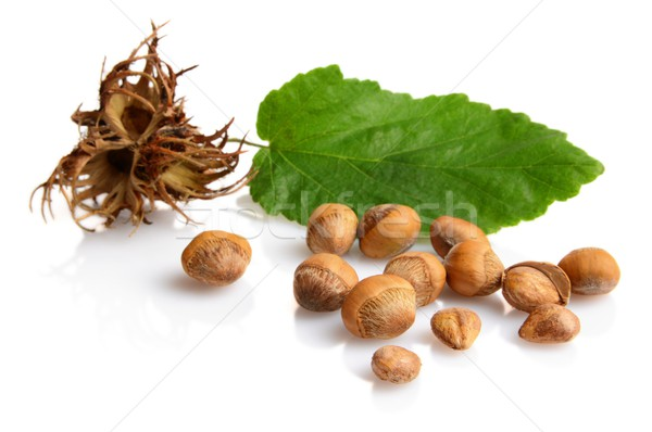 Wild hazelnuts with leaf and involucre,husk isolated Stock photo © dla4