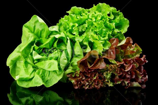 Many varieties of lettuce on black Stock photo © dla4