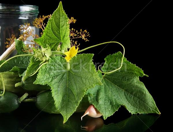 выстрел банку черный огурцы цветок Сток-фото © dla4