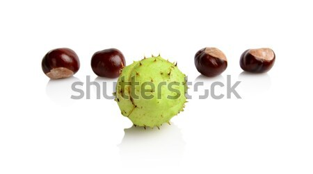 Four chestnuts in line with individual isolated on white background Stock photo © dla4