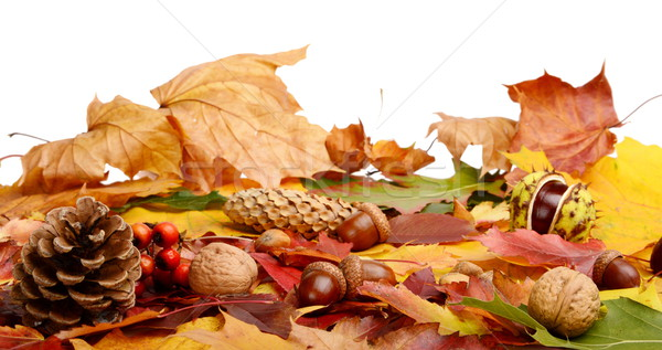 Group many forest fruits on autumn leaves in line Stock photo © dla4