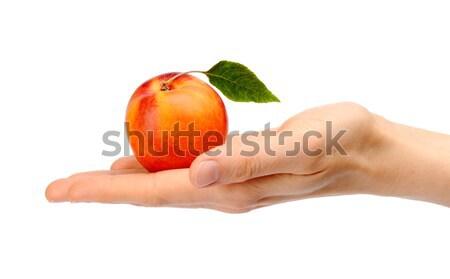 Stúdiófelvétel narancs érett nektarin levél kéz Stock fotó © dla4