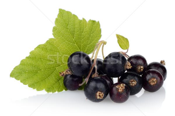 Photo of blackcurrant with leaf isolated on white Stock photo © dla4