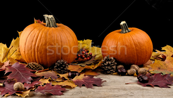 Pumpkins with autumn leaves for thanksgiving day on black backgr Stock photo © dla4
