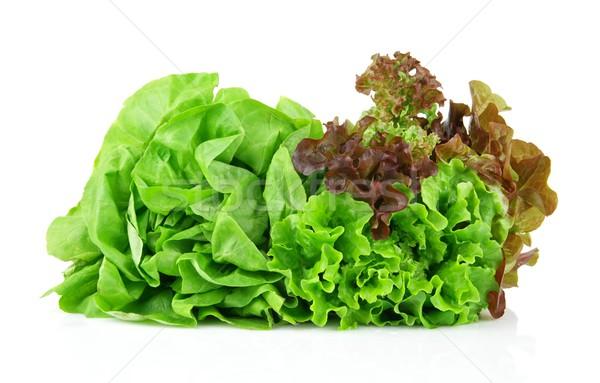 многие салата белый изолированный свет лист Сток-фото © dla4