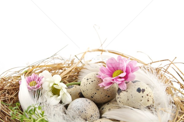 Easter quail eggs in the nest with flowers isolated Stock photo © dla4