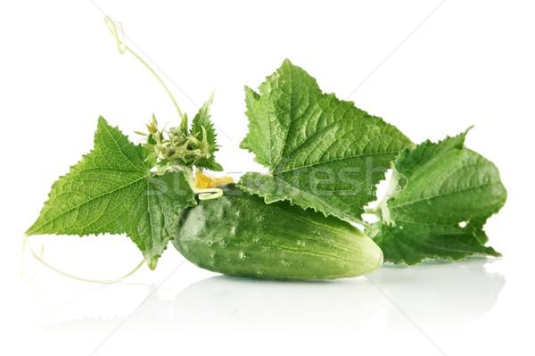 Photo stock: Fraîches · brut · concombre · laisse · fleur · blanche