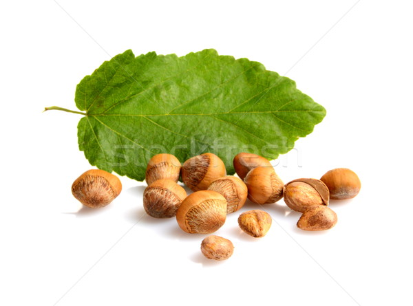 Wild hazelnuts with shell with leaf isolated Stock photo © dla4