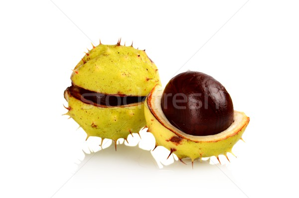 Closeup two chestnuts isolated on a white background Stock photo © dla4