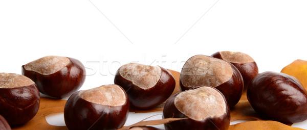 Horizontally many chestnuts with autumn leaves on white background Stock photo © dla4