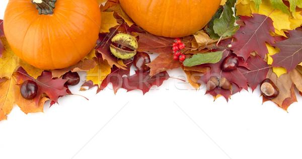 Tökök őszi levelek hálaadás nap fehér kilátás Stock fotó © dla4