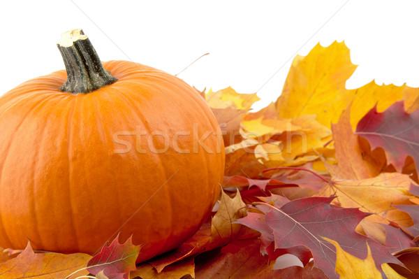 Foto stock: Decoración · calabaza · hojas · de · otoño · acción · de · gracias · día · blanco