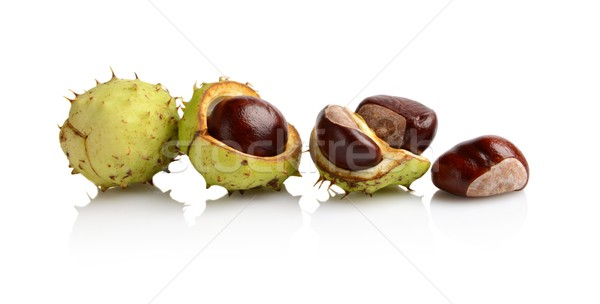 Four chestnuts in line isolated on white background Stock photo © dla4