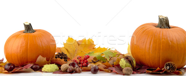 Pumpkins with autumn leaves for thanksgiving day on white background Stock photo © dla4