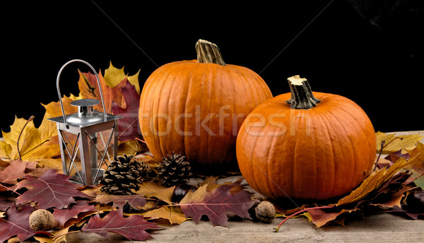 Pumpkins with lantern for thanksgiving day on black background Stock photo © dla4