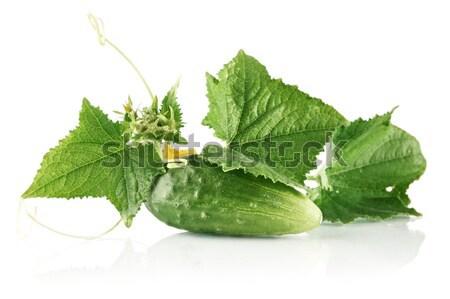 свежие сырой корнишон листва белый цветок Сток-фото © dla4