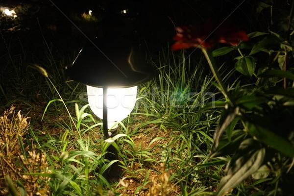 фонарь ночь саду древесины пейзаж дизайна Сток-фото © dmitriisimakov