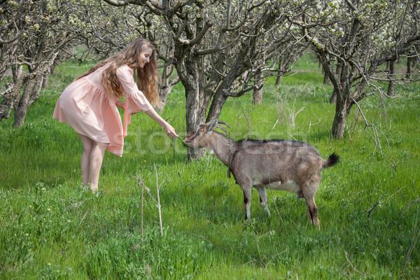 blonde in dress feeds a goat in the garden Stock photo © dmitriisimakov