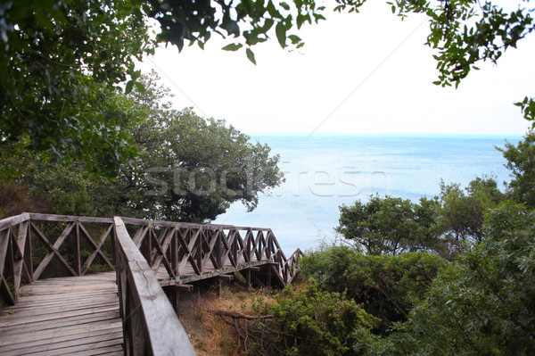 wooden bridge road in a rainforest landscape sea Stock photo © dmitriisimakov