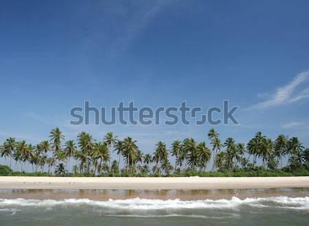 Kokosnoot palmen oceaan tropische blauwe hemel strand Stockfoto © dmitroza