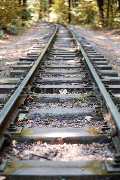 Erdő magányos ősz fa út vonat Stock fotó © dmitroza