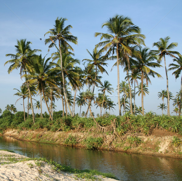 coconut palms and water  Stock photo © dmitroza