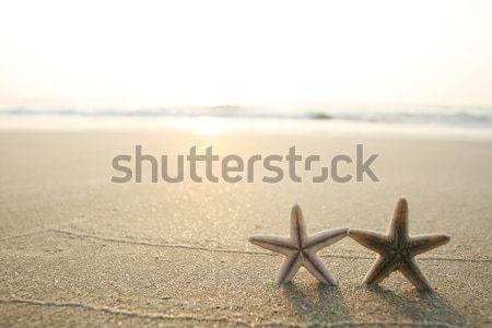 Starfish praia quadro areia da praia pôr do sol estrela Foto stock © dmitroza