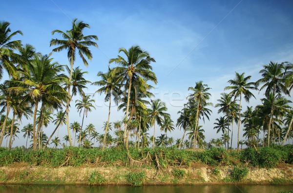 Kokosnoot palmen water tropische bewolkt blauwe hemel Stockfoto © dmitroza