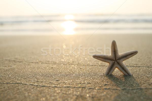 Starfish praia quadro areia da praia água peixe Foto stock © dmitroza