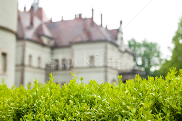View of old castle in summer Stock photo © dmitroza
