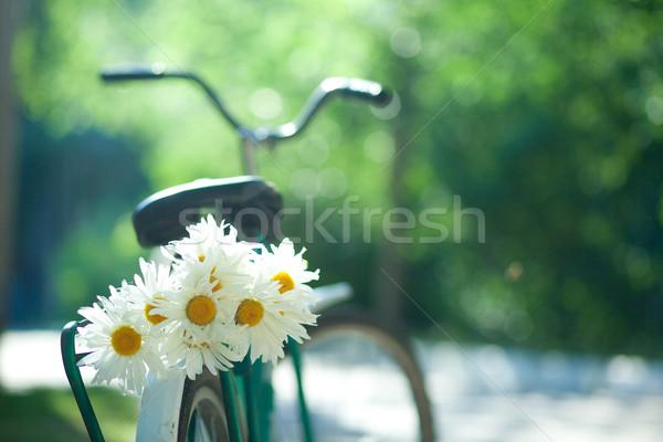 Oude fiets boeket witte Stockfoto © dmitroza