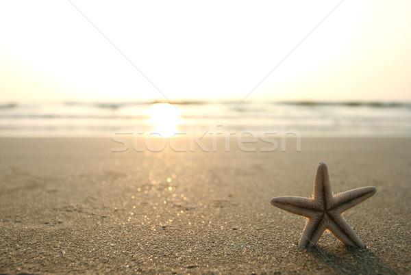 ヒトデ ビーチ 画像 海浜砂 空 日没 ストックフォト © dmitroza