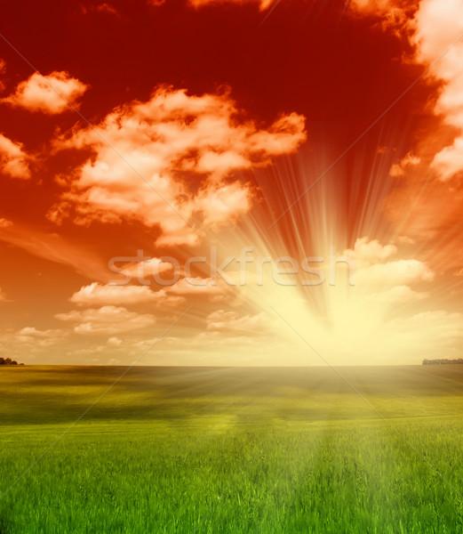 Verde campo pôr do sol céu trigo nublado Foto stock © dmitroza