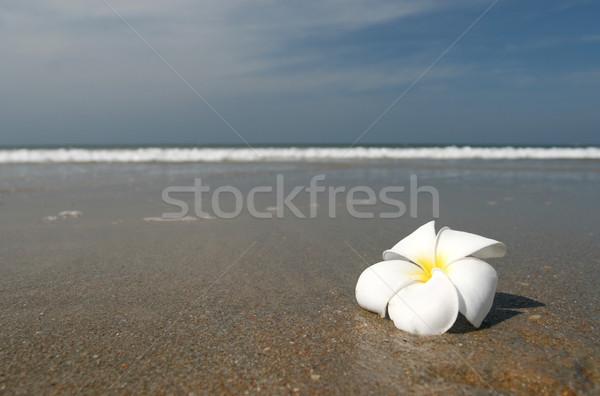 Flor blanca tierra playa blanco hermosa flor Foto stock © dmitroza
