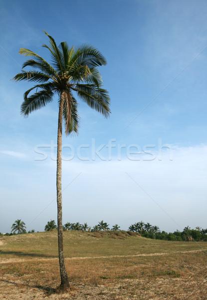 Kókuszpálma kék ég egy trópusi felhős égbolt Stock fotó © dmitroza