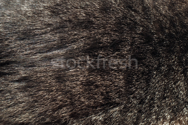 speckled fur background Stock photo © dmitroza