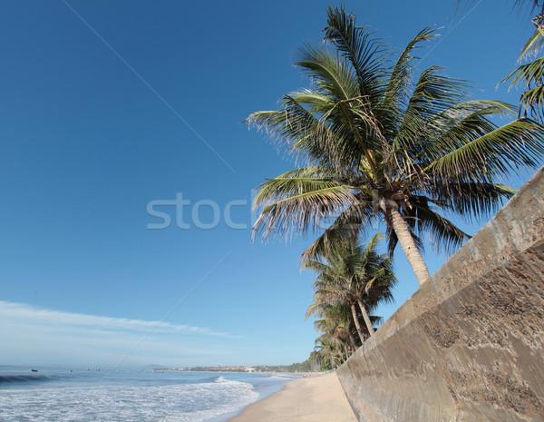 Palmeiras bom ver areia da praia blue sky oceano Foto stock © dmitroza