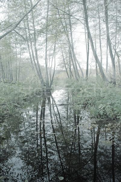 Rivier bos reflectie bomen boom natuur Stockfoto © dmitroza
