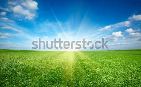 Sunset sun and field of green fresh grass under blue sky Stock photo © dmitry_rukhlenko