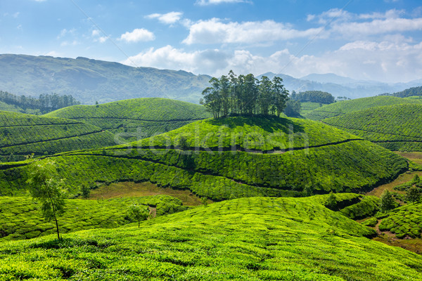 Thé ciel feuille vert montagnes asian Photo stock © dmitry_rukhlenko