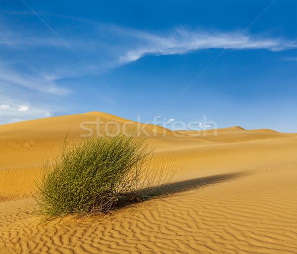 пустыне Индия песок небе закат растений Сток-фото © dmitry_rukhlenko
