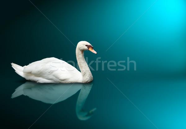 Néma hattyú madár állatok állat gyönyörű Stock fotó © dmitry_rukhlenko
