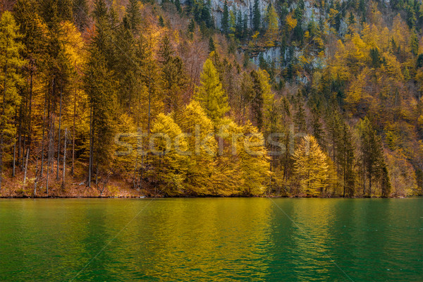 Autumn forest trees reflecting in lake Stock photo © dmitry_rukhlenko