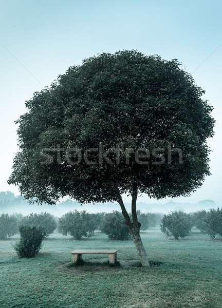 Lonely tree and empty bench Stock photo © dmitry_rukhlenko