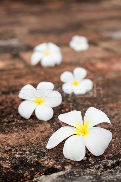 Frangipani (plumeria) flowers on stones Stock photo © dmitry_rukhlenko
