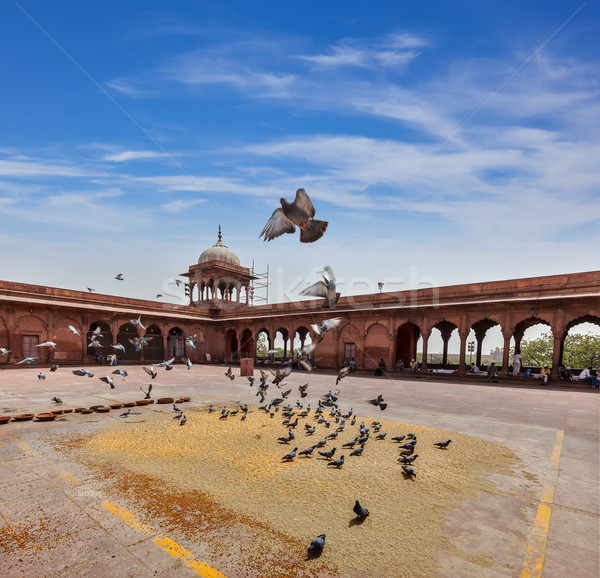 Pigeons in Jama Masjid mosque Stock photo © dmitry_rukhlenko