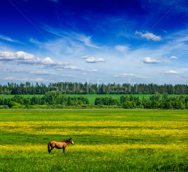 Spring summer green field scenery lanscape with horse Stock photo © dmitry_rukhlenko