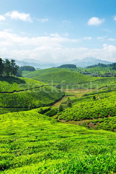 Thé feuille vert montagnes asian indian Photo stock © dmitry_rukhlenko