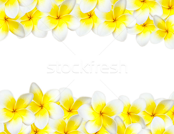 Flores plantas branco isolado fundo branco Foto stock © dmitry_rukhlenko